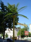 Правда, пальмы - пластмассовые. Пока что.